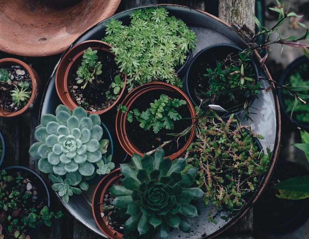 treino de plantas